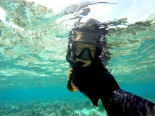 Snorkeling and sampling